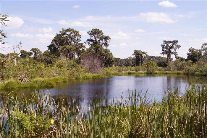 SRC Wetlands